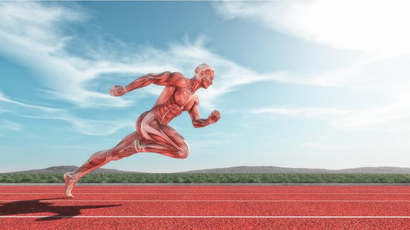 Fisiologia deportiva - ISAF