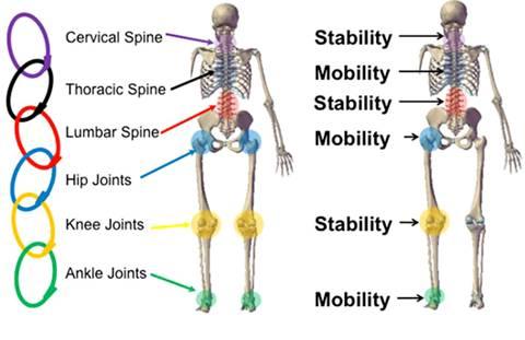 articulaciones cuerpo humano